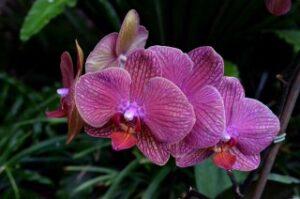 Flower 031011