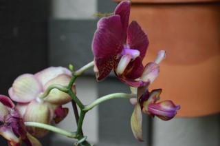 Flower-18