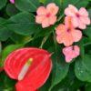 Flower-15